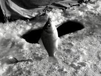 鱼和溃洞——请避免你的企业猝死