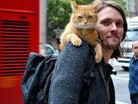 纽约一男子一言不合养了300只猫,原来是为了纪念儿子