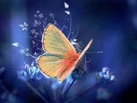 行业洗牌加剧,手机厂商未来需警惕蝴蝶效应