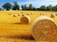 两会题案转向农村,互联网+农村还能怎么玩?