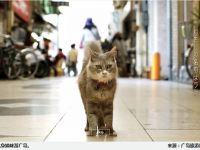 猫咪的眼睛看世界,给喵星人专用的谷歌街景在日本诞生